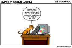 No es nada fácil ser un gato, dormir 20 horas y gestionar las #RedesSociales de tal forma que puedan conseguir seguidores. ¡Qué dura la vida de un gato!