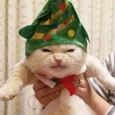 28 Very Funny Animals Pictures To Make Your Day Cute Funny Animals, Cute Baby Animals, Funny Cats, Wild Animals, Christmas Animals, Christmas Cats, Merry Christmas, Pretty Cats, Beautiful Cats