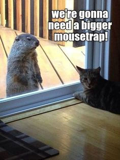 We iz having a neybor ober for lunch - LOLcats is the best place to find and submit funny cat memes and other silly cat materials to share with the world. We find the funny cats that make you LOL so that you don't have to. Funny Animal Memes, Funny Animal Pictures, Cute Funny Animals, Funny Cute, Cute Cats, Funny Memes, Funny Pics, Funny Kitties, Meme Pictures