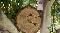 Dart Board Made From Wood Slice