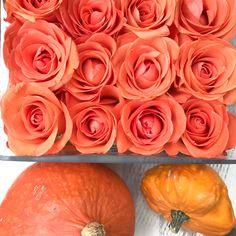Orange Rose – passend zum Kürbis Orange Rosen, Hot Dogs, Ethnic Recipes, Flowers, Food, Autumn Decorations, Essen, Meals, Royal Icing Flowers