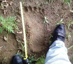 Bigfoot Found! Bigfoot photos and sightings at Mt. St. Helens near Ape ...