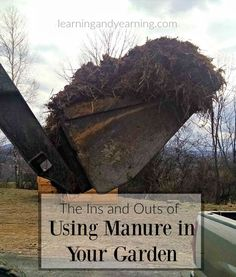 Learn the ins and outs of using manure in your garden, and important questions to ask your farmer to be sure your manure is safe.: