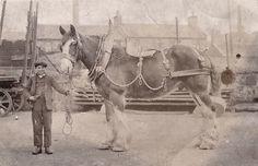 Boy with work horse