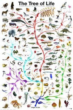 The Tree of Life Poster Poster Print, 24x36 EuroGraphics,http://www.amazon.com/dp/B003XRAI90/ref=cm_sw_r_pi_dp_O71Qsb0ZEHQGD745