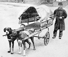 A French Red Cross ambulance being drawn by dogs through a deserted town.