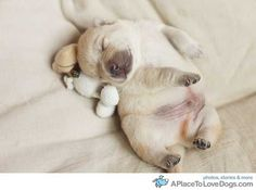 precious puppy!!!