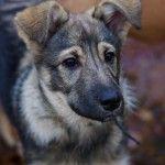 patversme.lv » Pieejamie suņi