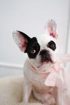 bella b. | My lil supermodel:) | Miss Tristan B. | Flickr