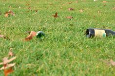 glass on grassland