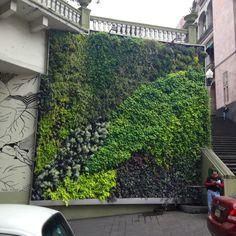 Muro Verde , al lado escaleras Plaza Publica de Xalapas, Mexico