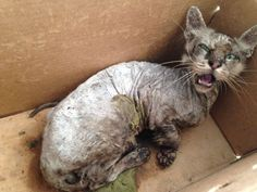 Petition: Bad rescuers must be stopped . Using medical excuses are unacceptable if they are just that excuses .