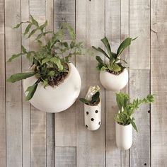 ceramic wall planters