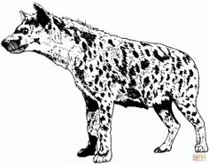 realistic spotted hyena coloring page free printable coloring pages