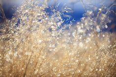 Field Grass and Dew | Bob Garrigus #photography