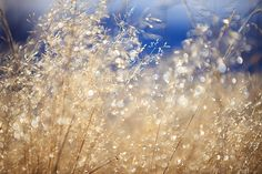 Field Grass and Dew   Bob Garrigus #photography