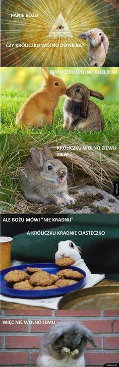 Wiem, że jest milion milionów (może nie aż tyle) memów tutaj, ale ja … #losowo # Losowo # amreading # books # wattpad Wtf Funny, Funny Memes, Polish Memes, Zootopia, Man Humor, Animal Memes, Funny Photos, Spiderman, Haha