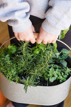 Utensil Holder Herb Garden