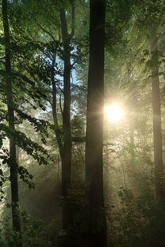 rebakeat:  Sun breaks fog By Jens Böhme
