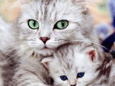 Eyes of a mother....