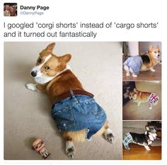 ☄pιnтereѕт: нelpтнιѕғangιrl☄️ - Tap the pin for the most adorable pawtastic fur baby apparel! You'll love the dog clothes an