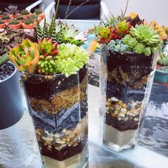 Hexagonal glass vases look stunning in layered sand moss and feature stones topped with our very own sunkissed succulents Succulent Terrarium, Bird Cage, Looking Stunning, Vases, Glass Vase, Succulents, Stones, Homemade, Repurposed