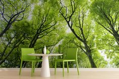 Bright Green Canopy Forest Wallpaper