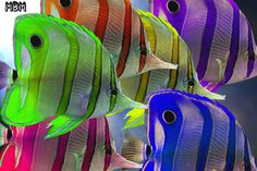Very colorful Angel fish