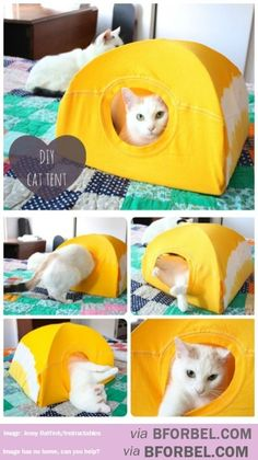 Build A Tent For Your Cat…