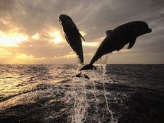 "ocean life ""FREEDOM"""