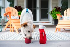 Ingenious water bottle with detachable bowl. You drink from the top, you pour water into the detachable bowl for your pup. Biking With Dog, Hiking Dogs, Pet Travel, Dog Harness, Pet Health, Training Your Dog, Get Outside, Health And Safety, Gourds