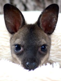 SeaWorld San Antonio welcomed a new baby wallaby, and this little guy needs a name. Help us name him!