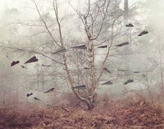 """Paper aeroplanes in eerie woods from the """"And Then..."""" photo project by designer Nicola Yeoman & photographer Jo Metson Scott."""
