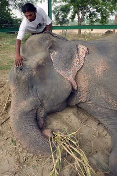 "Raju stepped out of the truck and took his first step to freedom at one minute past midnight on July 4, which Katrick said ""felt so extraordinarily fitting."" 