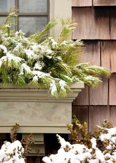 Create bountiful outdoor winter arrangements with a little help from Mother Nature. White pine.