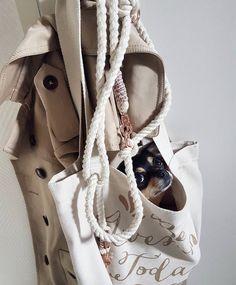 ⚜️ Was darf bei einem perfekten Outfit nicht fehlen ? ⚜️  Na klar, der vierbeinige Liebling und die passende Whitekennel Vintage Leine ! 🖤  ⚜️Die süße Chihuahua Hündin Jule in ihrer neuen Mini Tauleine aus unserer Vintage Serie ⚜️ Balenciaga City Bag, Dog Mom, Tricks, Shoulder Bag, Outfit, Mini, Bags, Vintage, Fashion