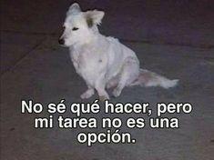 Funny Spanish Memes, Spanish Humor, Bts Memes, Funny Memes, Ugly Americans, Music Memes, Bts Chibi, Love Memes, Meme Faces