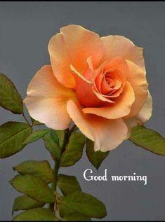 Beautiful Orange Rose - My site Beautiful Flowers Wallpapers, Beautiful Rose Flowers, Flowers Nature, Amazing Flowers, Morning Rose, Good Morning Flowers, Orange Flowers, Yellow Roses, Exotic Flowers
