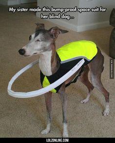 Helping A Blind Dog #lol #haha #funny
