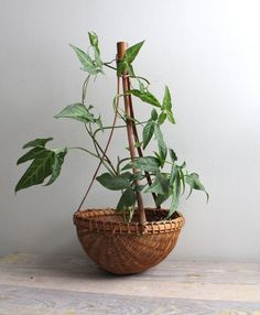 house plant in a basket