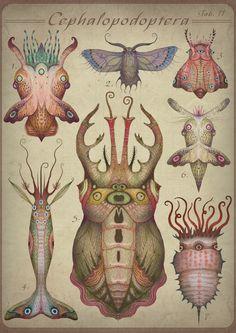 Cephalopodoptera / Tab II by Vladimir Stankovic