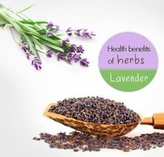 Lavender is considered to work wonders for your skin and beauty. No wonder then so many beauty products use this herb. Imagine using the real thing! It also has antiseptic and anti-inflammatory properties. Even serious ailments like depression, anxiety, stress and insomnia can be treated with lavender oil. When consumed, it helps to cure nausea, bad stomach and vomiting. One herb that does wonders for your body inside and out!