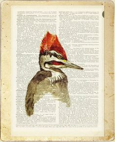 vintage woodpecker painting -  printed on page from old dictionary