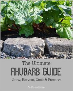The ultimate rhubarb guide to growing, harvesting, preserving and cooking with rhubarb. Lots of tips and recipe ideas for both sweet and savory dishes.