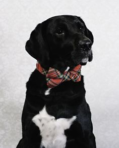 Adding one more for the Dog Posing. Here's my boy Finn. He's ready for the holidays. http://ift.tt/2iBjutO