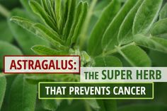 The Super Herb that Prevents Cancer