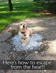 #funny #funnyanimals #dog