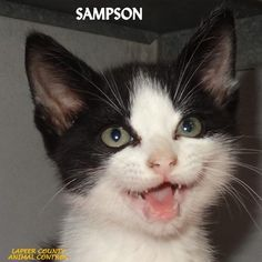 ADOPTED!  Tag# 10597 Name is Sampson Black/White Male-not neutered Cutie!    Located at 2396 W Genesee Street, Lapeer, Mi. For more information please call 810-667-0236. Adoption hrs M-F 9:30-12:00 & 12:30-4:15, Weds 9:30-12:00 & Sat 9:00-2:00  https://www.facebook.com/267166810020812/photos/a.852885548115599.1073742162.267166810020812/852887868115367/?type=3&theater