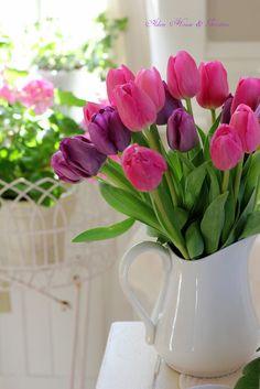 Aiken House & Gardens: Spring Cheer #pink #purple #tulips