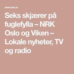 Seks skjærer på fuglefylla – NRK Oslo og Viken – Lokale nyheter, TV og radio